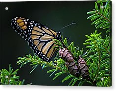 Acrylic Print featuring the photograph Eastern Monarch by Juergen Roth