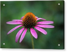 Acrylic Print featuring the photograph Eastern Purple Coneflower by Ben Shields