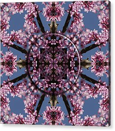 Eastern Red Bud Mandala Acrylic Print by Alan Skonieczny