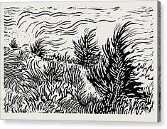 Eastern Red Cedar Acrylic Print