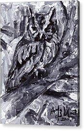 Eastern Screech-owl Acrylic Print