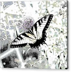 Eastern Tiger Swallowtail Butterfly - Bleached Abstract  Acrylic Print by Scott D Van Osdol