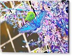 Eastern Tiger Swallowtail Butterfly - Blue Abstract Acrylic Print by Scott D Van Osdol