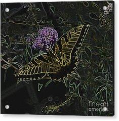 Eastern Tiger Swallowtail Butterfly - Neon Glow Acrylic Print by Scott D Van Osdol