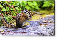 Acrylic Print featuring the photograph Eating Chipmunk by Jonny D