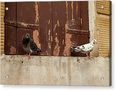 Ebony And Ivory Acrylic Print by Art Ferrier