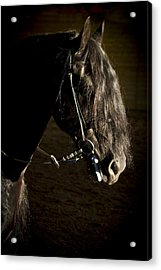 Acrylic Print featuring the photograph Ebony Beauty D6951 by Wes and Dotty Weber