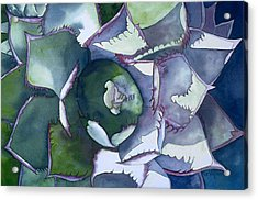 Echeveria Acrylic Print by Eunice Olson