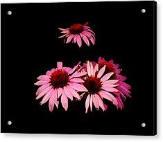 Echinacea Pop Acrylic Print