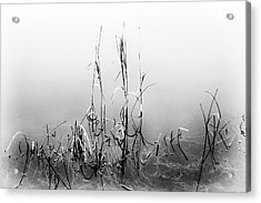 Echoes Of Reeds 1 Acrylic Print