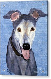 Eddie - Greyhound Acrylic Print by Terri Mills