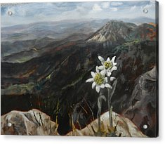 Edelweiss Moment Acrylic Print