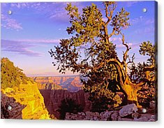 Edge Of Canyon Acrylic Print by Alan Lenk