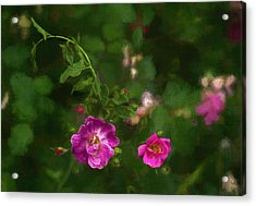 Edgefield Acrylic Print by Jeff Oates Photography