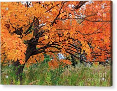Edna's Tree Acrylic Print