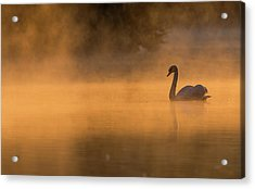 Effulgent Stratford Morning Air Acrylic Print