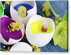 Egg Shells With Paints And Spring Flowers As A Easter Decoration Acrylic Print by Dariya Angelova