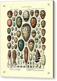 Eggs Collection Acrylic Print