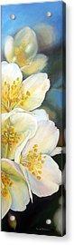 Eglantine Acrylic Print by Muriel Dolemieux