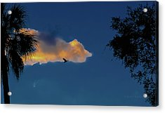 Egressing Egret Acrylic Print by DigiArt Diaries by Vicky B Fuller