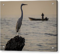 Egret And Boat Acrylic Print by Dane Strom