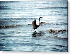 Acrylic Print featuring the photograph Egret At Sunset by Kathleen Stephens