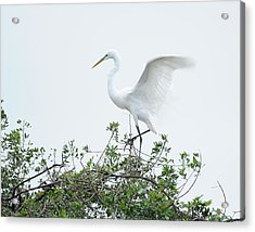 Egret Balance Acrylic Print by Keith Lovejoy
