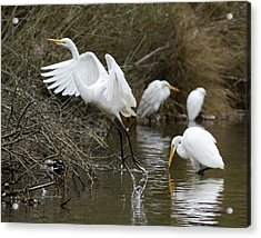 Egret Exit Acrylic Print by George Randy Bass