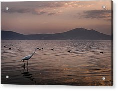 Egret Fishing In Lake At Sunset Acrylic Print by Dane Strom