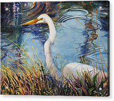 Egret In Cameron Marsh Acrylic Print by Sue Zimmermann
