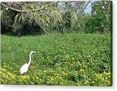 Egret In Flowers Acrylic Print by Geralyn Palmer