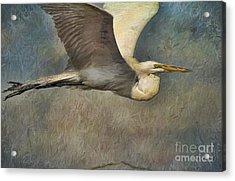 Egret Journey Acrylic Print