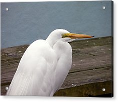 Egret On The Dock Acrylic Print by Al Powell Photography USA