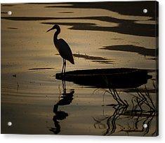 Egret On The Lake Acrylic Print by Dane Strom