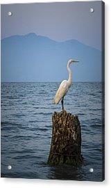 Egret On Tree Stump At Lake Chapala Acrylic Print by Dane Strom