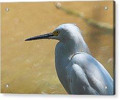 Egret Pose Acrylic Print