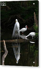 Egret Reflection Acrylic Print