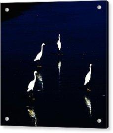 Egret Reflections Acrylic Print by David Lane