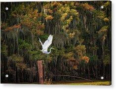 Egret Sanctuary Acrylic Print