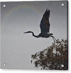 Egret Silhouette Acrylic Print by Bill Perry