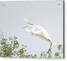 Egret-taking Flight Acrylic Print by Keith Lovejoy