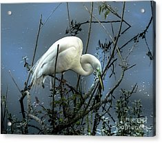 Acrylic Print featuring the photograph Egret Under Marina Lights by Robert Frederick