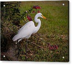 Egret's Meal Acrylic Print