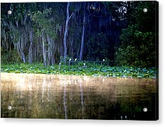 Egrets On A Fence Acrylic Print