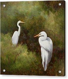 Egrets Roosting Acrylic Print