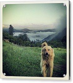 Egunon Chuvak! #dog #animal #pet Acrylic Print