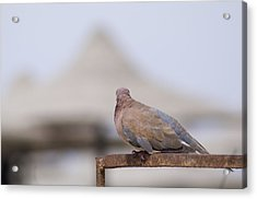 Egypt Acrylic Print by Be Lucca