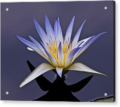 Egyptian Lotus Acrylic Print