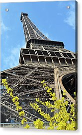 Eiffel Tower And Yellow Blooms Springtime Paris France Acrylic Print by Shawn O'Brien