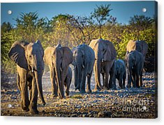 Eight Elephants Acrylic Print
